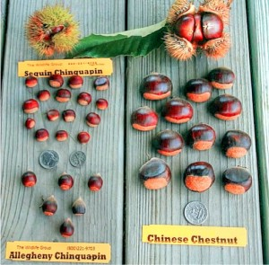 wildlife_group_chestnut_types
